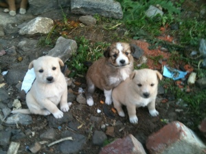 Puppies, just outside of our shoe maker's storefront