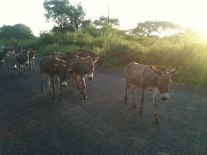 Donkeys on the road to Konso, Ethiopia