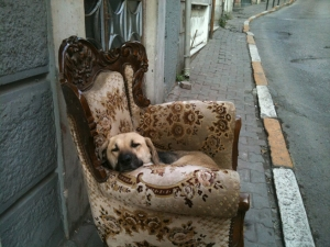 Dog in an armchair